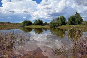 Rancho San José del Carrizo Pond